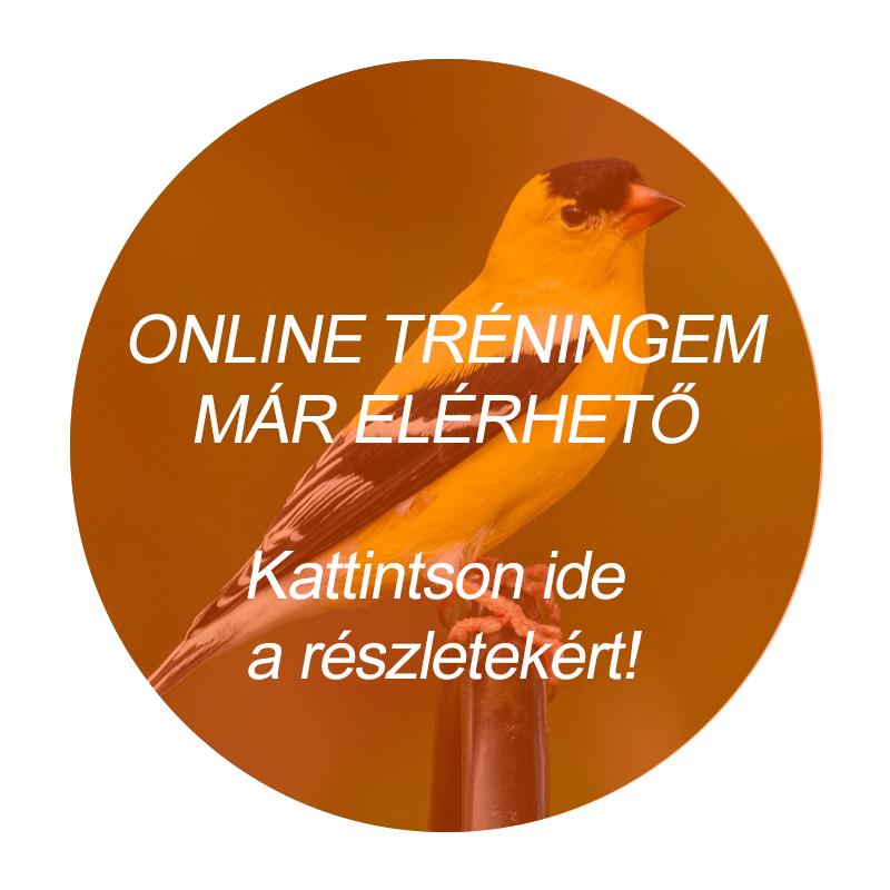 online logopédia
